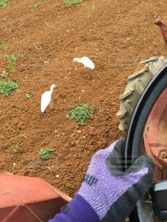 トラクターでの農作業あるある。の写真・画像素材[1582686]