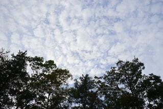 秋空の写真・画像素材[1611371]