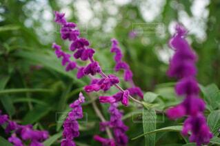 花の写真・画像素材[1611374]