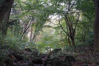 秋の公園の写真・画像素材[1611421]