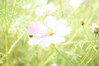 近くの花のアップの写真・画像素材[1614057]