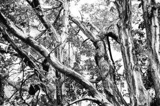 樹木の写真・画像素材[1614088]