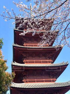 桜と五重の塔の写真・画像素材[2027093]