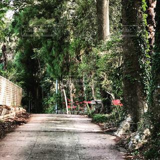 森の中の石の道の写真・画像素材[1559731]