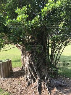 近くの木のアップの写真・画像素材[1631585]