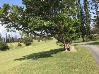 公園の木の写真・画像素材[1631586]