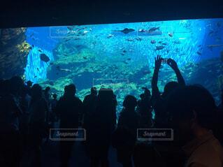 水族館の写真・画像素材[1560744]