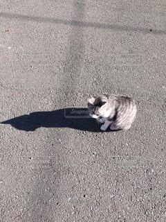 猫と影の写真・画像素材[1564259]