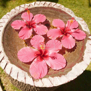 Hibiscus!!!の写真・画像素材[1607106]