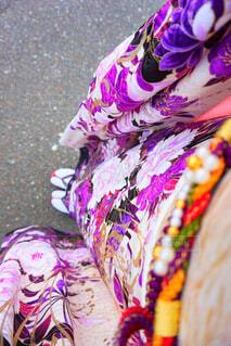 紫の花のグループの写真・画像素材[1561210]