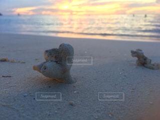 グアムの日の入りの写真・画像素材[1563589]
