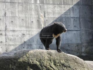 クマの写真・画像素材[1592741]