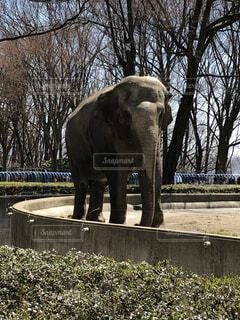アジアゾウの写真・画像素材[2278871]
