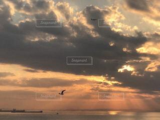 曇り空を飛ぶ鳥の群れの写真・画像素材[1609123]