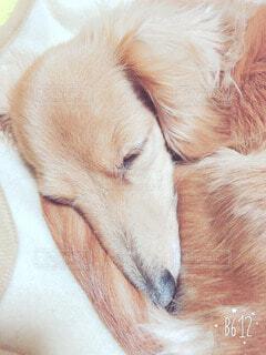 犬の写真・画像素材[52577]