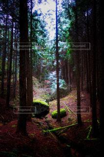 森の中での一コマの写真・画像素材[1715777]