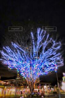 駅前のツリーの写真・画像素材[1718204]
