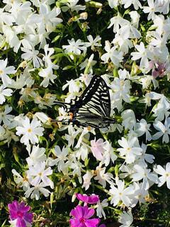 一休みする蝶の写真・画像素材[2089590]