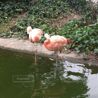 水の中に立っている鳥の写真・画像素材[1631917]