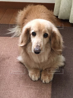 No.52754 犬