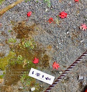 紅葉の写真・画像素材[1572959]
