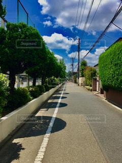 盛夏の写真・画像素材[1573336]