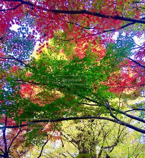 近くの木のアップの写真・画像素材[1652062]