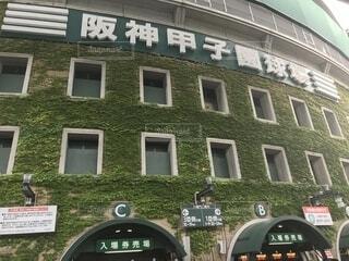 阪神甲子園球場の写真・画像素材[1568245]