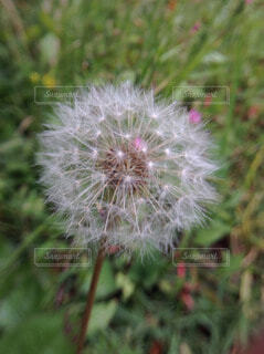 自然の写真・画像素材[56366]