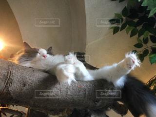お昼寝の写真・画像素材[1569516]