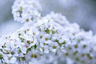 花の写真・画像素材[2611606]