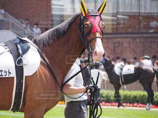 馬に乗る人の写真・画像素材[1698270]