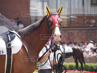 建物の前に立っている大きな茶色の馬の写真・画像素材[1698272]