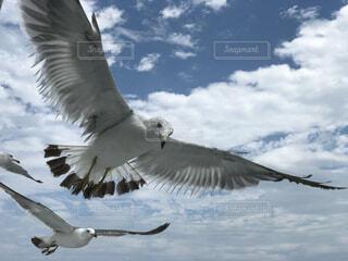 海を飛ぶ鳥の写真・画像素材[1575193]