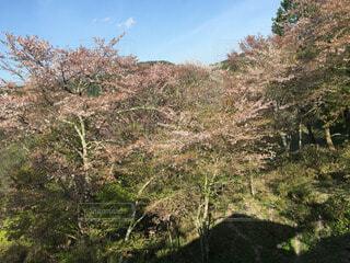 森林 - No.52966