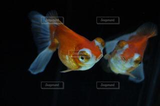 魚の写真・画像素材[1570044]