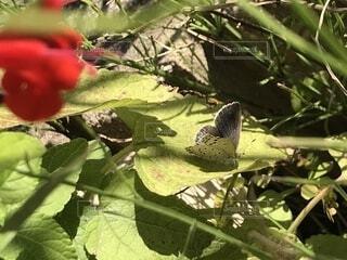 草陰の蝶の写真・画像素材[1580590]