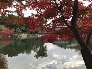 庭園の紅葉の写真・画像素材[1653628]