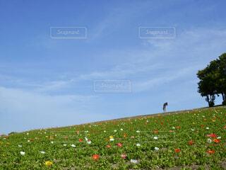 花さじきの写真・画像素材[1571918]