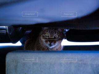 車の下の猫の写真・画像素材[2200470]
