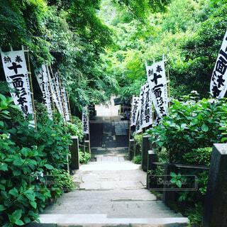 杉本寺の写真・画像素材[1571571]