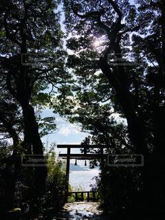 神の島の鳥居の写真・画像素材[2303351]