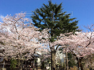上野の写真・画像素材[1572388]