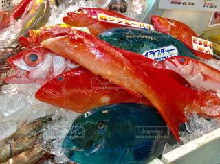 海鮮市場の写真・画像素材[1594019]