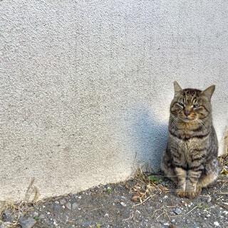 地面に座っている猫の写真・画像素材[1859532]