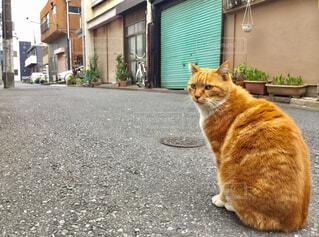 猫の写真・画像素材[2026187]