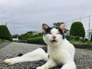 地面に横たわっている猫の写真・画像素材[4792335]