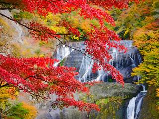 袋田の滝🍁の写真・画像素材[1599684]
