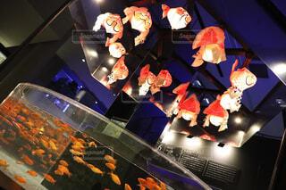 金魚の写真・画像素材[1572506]