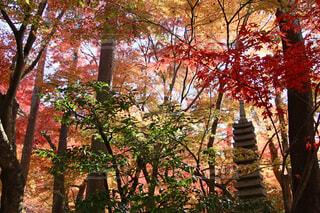 彩りの秋の写真・画像素材[1578113]